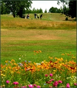 Wildflowers in the foreground, through a green golf course, up to the tee at top of the hill.