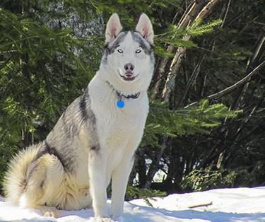 Lodge Dog Coach 2014